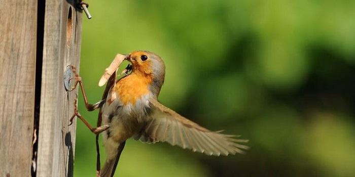 Vogelbescherming-klantacquisitie