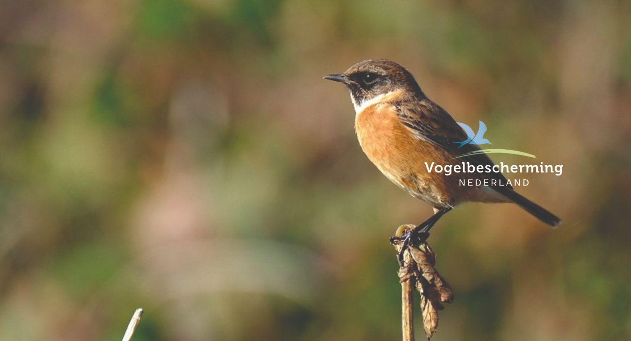 vogelbescherming-predictive-analysis
